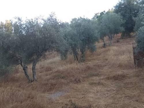 imagen 1 de Venta de parcela con olivos y alcornoques en cazalla