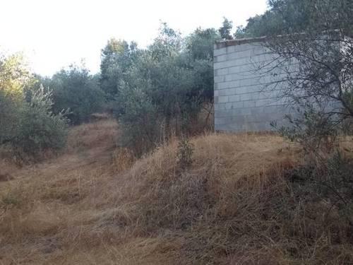 imagen 3 de Venta de parcela con olivos y alcornoques en cazalla