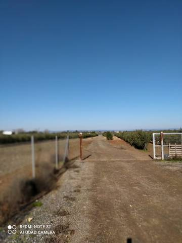 imagen 4 de Venta de finca con olivos y casa en
