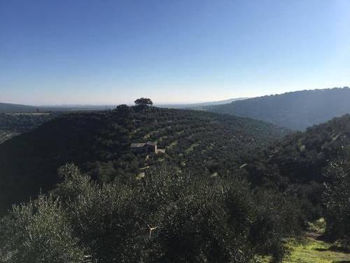 imagen 1 de Venta de precioso olivar con casa en La Puebla de los Infantes