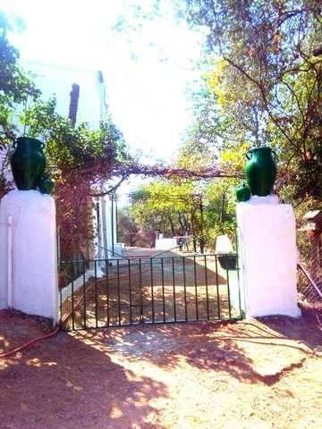 imagen 5 de Venta de olivar y cortijo en Constantina (Sevilla)