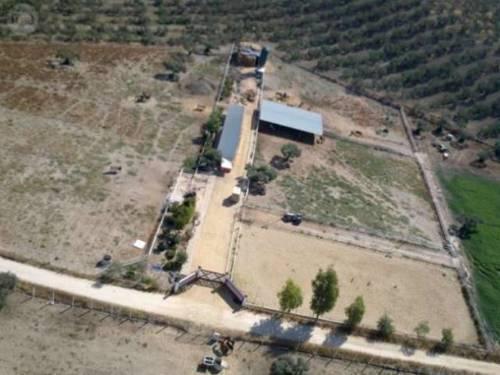 imagen 4 de Estupenda finca con instalaciones hípicas
