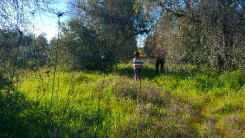 imagen 2 de Venta de parcela en Tomares (Sevilla)