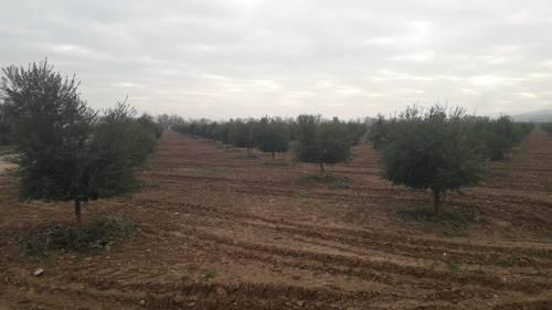 imagen 1 de Preciosa finca de olivar intensivo en Andújar