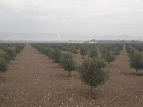 imagen 4 de Preciosa finca de olivar intensivo en Andújar
