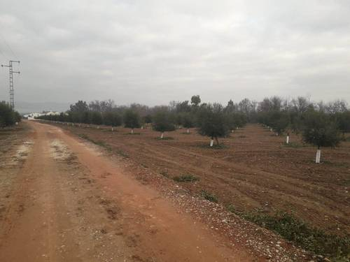 imagen 7 de Preciosa finca de olivar intensivo en Andújar