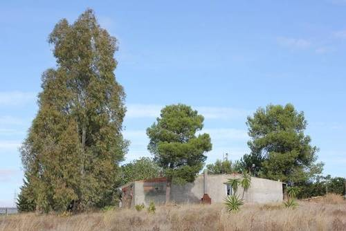 imagen 2 de Finca rústica con pequeña construcción en Alcalá de Guadaira