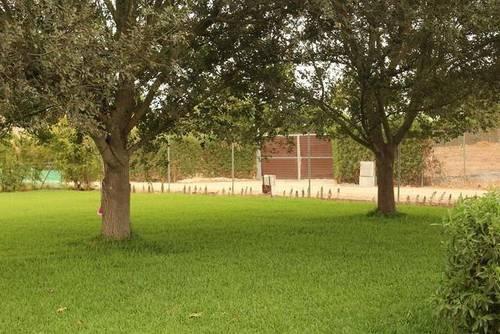 imagen 3 de Venta de casa con terreno en Utrera (Sevilla)