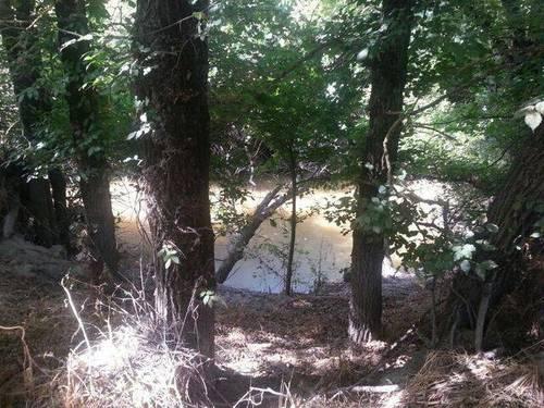imagen 3 de Venta de olivar con buen acceso en Arahal