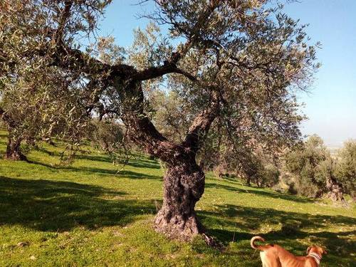 imagen 2 de Finca rústica cerca de Sevilla