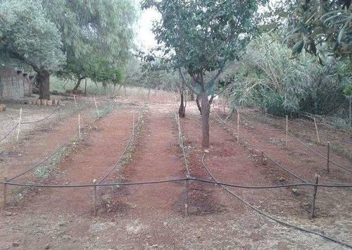 imagen 5 de Venta de olivar con casa en El Pedroso (Sevilla)