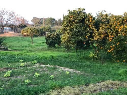 imagen 5 de Venta de finca con casa y bien ubicada en Sanlucar la Mayor