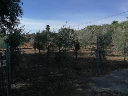 imagen 4 de Venta de parcela con casa y plaza de toros en Guillena