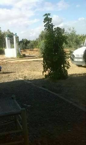 imagen 3 de Venta de finca con casa en Lebrija