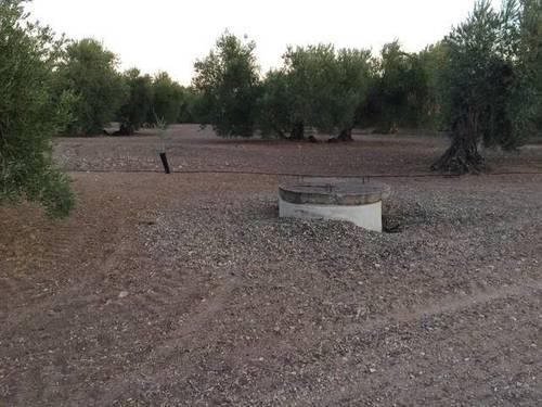 imagen 1 de Venta de olivar en Cazalla de la sierra