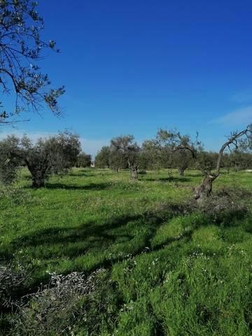 imagen 1 de Venta de finca con olivos centenarios en Pilas