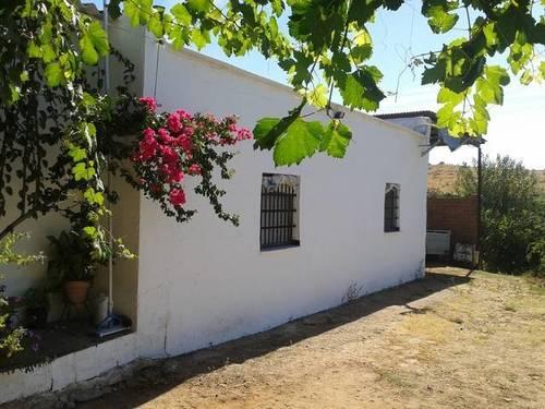 imagen 6 de Venta de finca con casa, nave y olivar en Cantillana