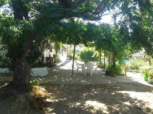 imagen 4 de Venta de finca con casa, nave y olivar en Cantillana