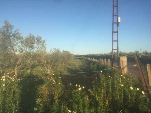 imagen 2 de Venta de parcela con olivos y buen acceso en Utrera