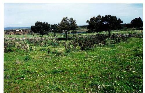imagen 3 de Venta de bonita finca con cortijo en Castilblanco de los Arroyos