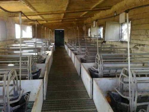 imagen 3 de Venta de finca para porcino en Castilblanco de los Arroyos