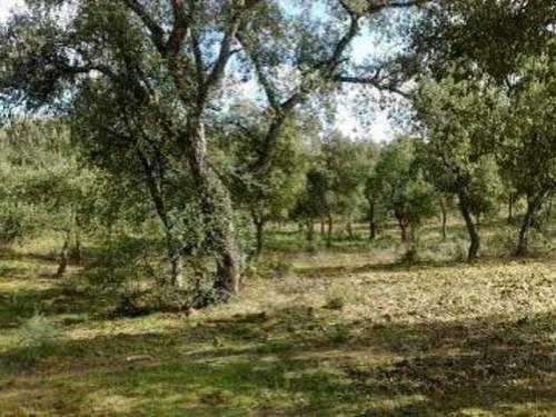 imagen 4 de Venta de finca para porcino en Castilblanco de los Arroyos