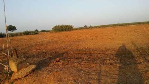 imagen 2 de Venta de parcela vallada en Bollullos