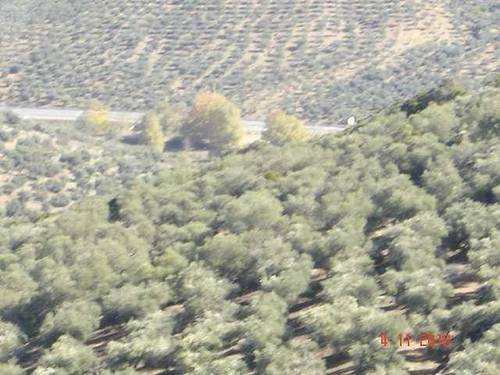 imagen 2 de Venta de olivar con cortijo a restaurar
