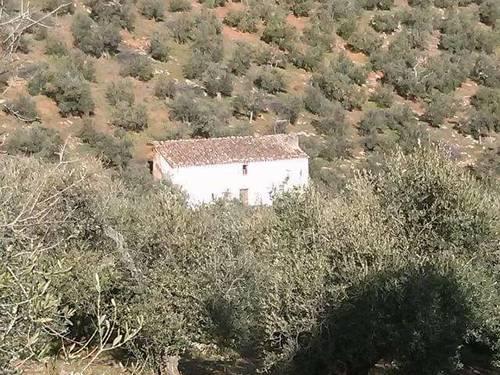 imagen 5 de Venta de olivar con cortijo a restaurar