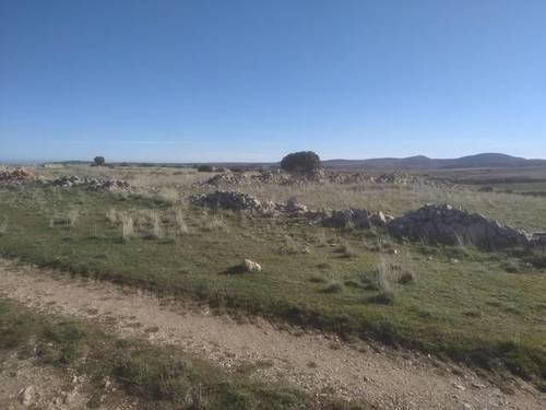 imagen 2 de Venta de impresionante finca en Pozuelo (Soria)