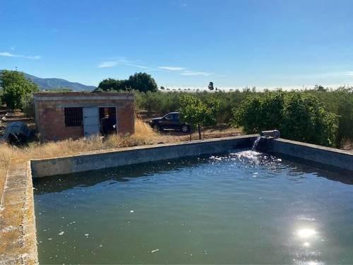 imagen 4 de Venta de finca de olivos en Alcanar (Tarragona)