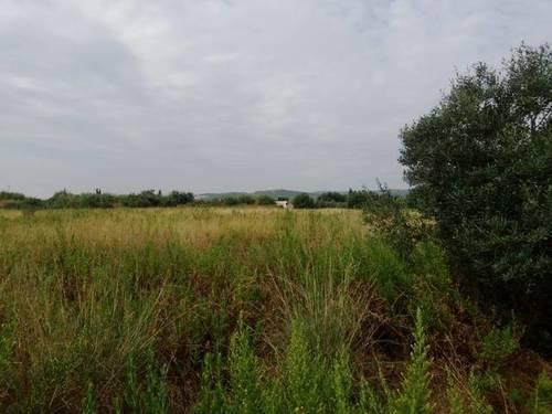 imagen 1 de Venta de finca bien ubicada con olivos en El Vendrell