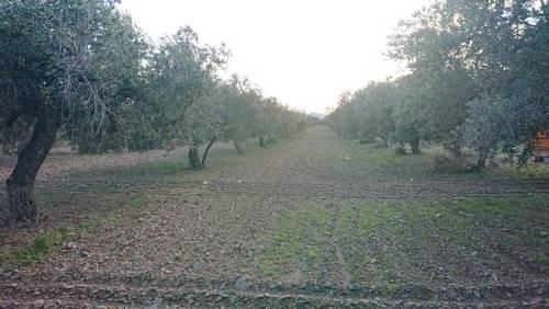 imagen 1 de Venta de olivar con buen acceso en Botarell