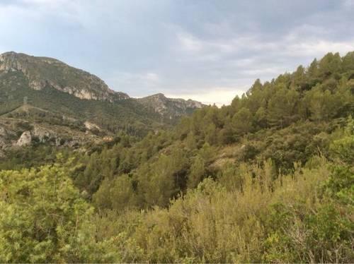 imagen 1 de Venta de finca especial en Cambrils (Tarragona)