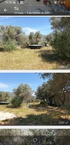 imagen 2 de Venta de finca de olivos vallada en La Senia