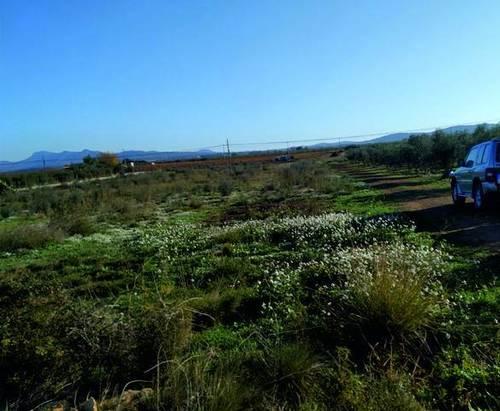 imagen 1 de Venta de finca en Brafim (Tarragona)