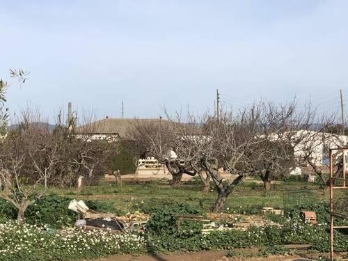 imagen 2 de Venta de finca de naranjos con vivienda en Tarragona