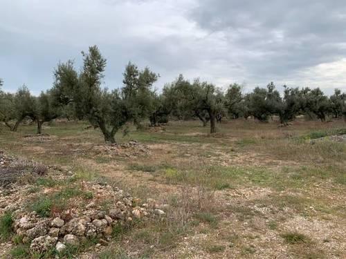 imagen 1 de Venta de finca de olivos llana en Tortosa