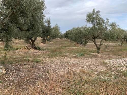 imagen 2 de Venta de finca de olivos llana en Tortosa