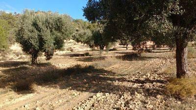 imagen 1 de Venta de finca de olivos en Canseres