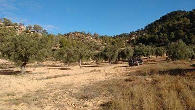 imagen 2 de Venta de finca de olivos en Canseres