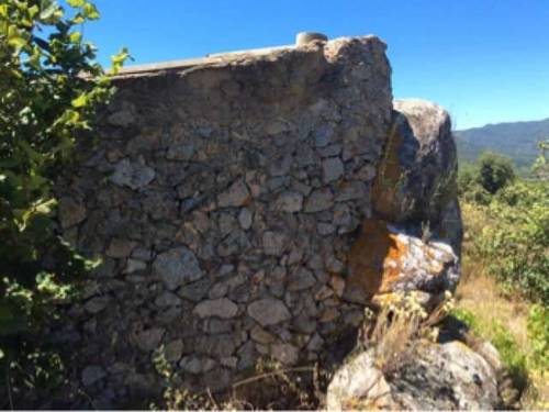 imagen 2 de Venta de finca de avellanos en Cambrils