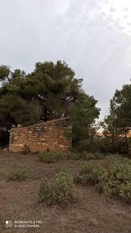 imagen 3 de Venta de finca de almendros en Gandesa