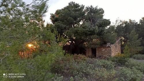 imagen 4 de Venta de finca de almendros en Gandesa