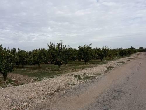 imagen 1 de Venta de finca de naranjos en Santa Bárbara (Tarragona)
