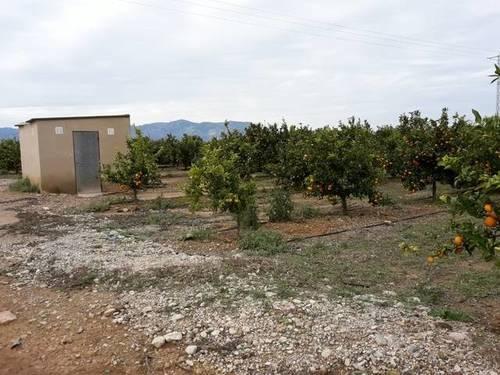 imagen 2 de Venta de finca de naranjos en Santa Bárbara (Tarragona)