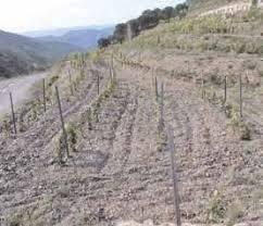 imagen 1 de Venta de viñedo en El Lloar (Tarragona)
