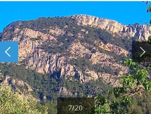 imagen 1 de Venta de finca de olivos en Benifallet