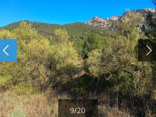 imagen 2 de Venta de finca de olivos en Benifallet