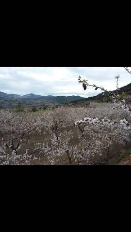 imagen 1 de Venta de finca de almendros con buen acceso en Alforja